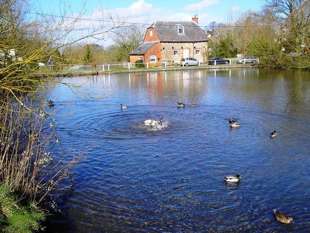 A little quarrel, village pond, Bishopstone, Swindon