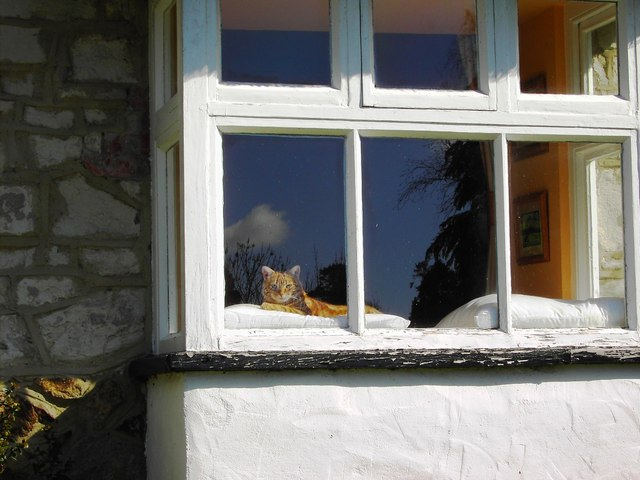 Ginger cat in a cottage window, Bishopstone, Swindon
