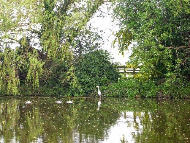 The little lake at Lower Town, Preston Wynne