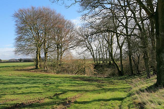 Tree-lined pit on Wood Farm, nr Bramdean