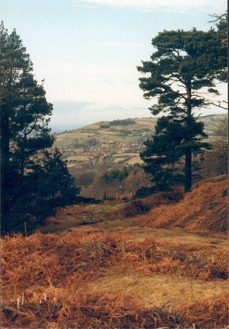 Big Wood near Osmotherley