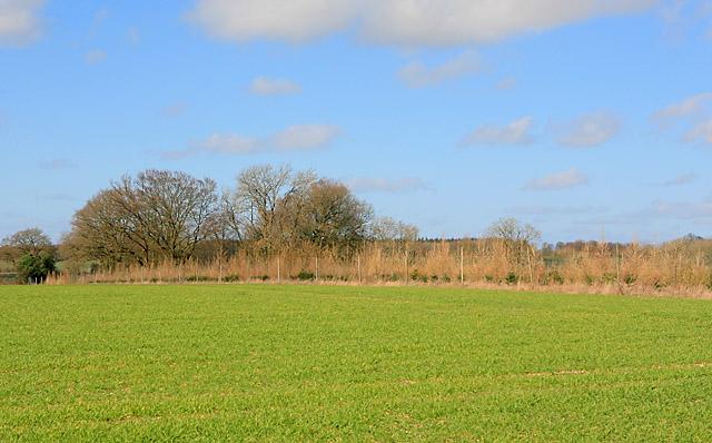 Plantation on Wood Farm