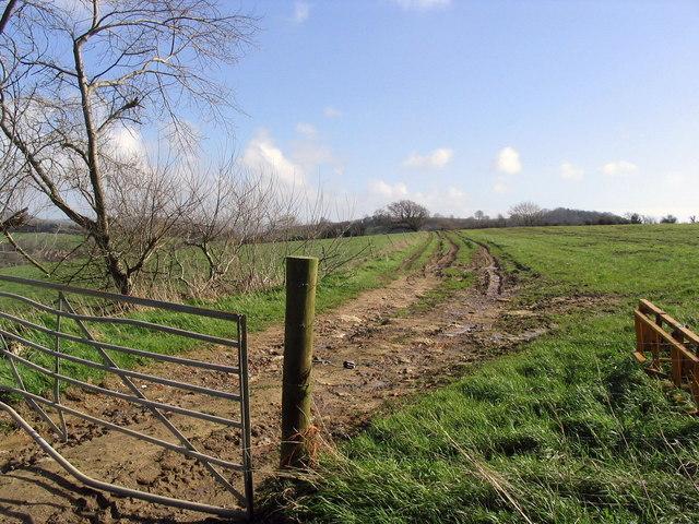 Fields and hillside near Pymore