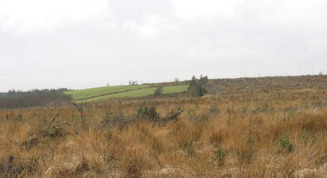 An enclave of pasture land in the forest