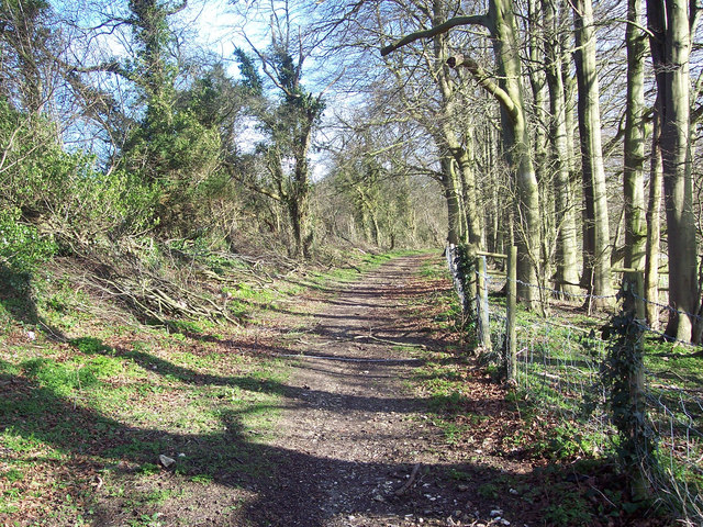 Track to Mean Wood, Dean Hill