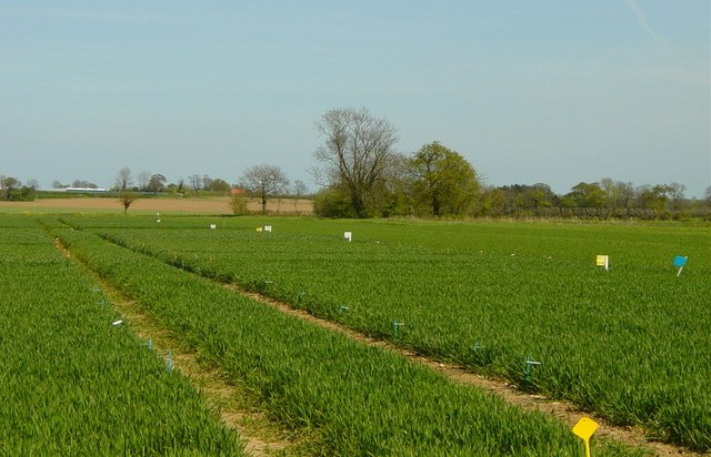 Crop Trials at Manor Farm Morley