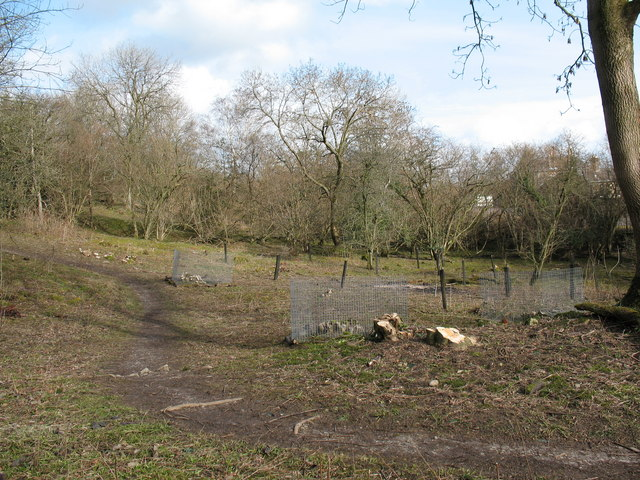 Coppicing, Freeholders Wood