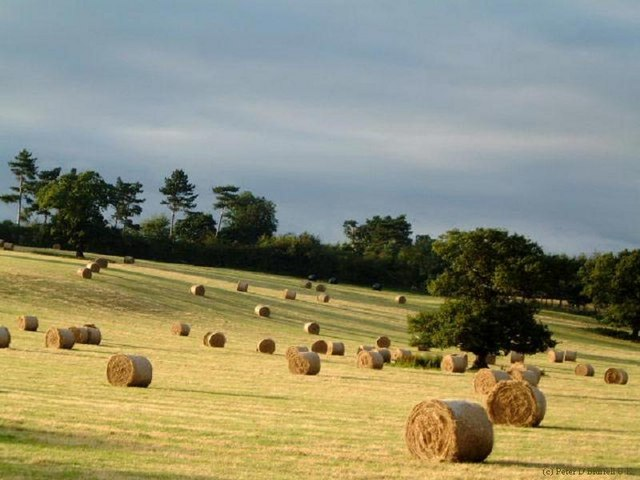 The rolling hayfield