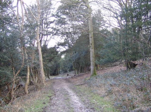 Descent through Compton Down Wood