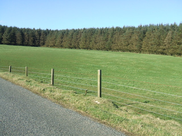 Field by conifer plantation