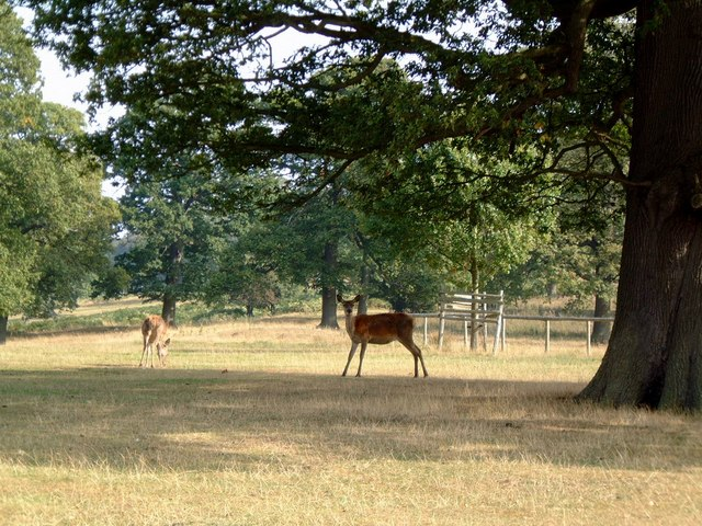 Eastnor Deer Park