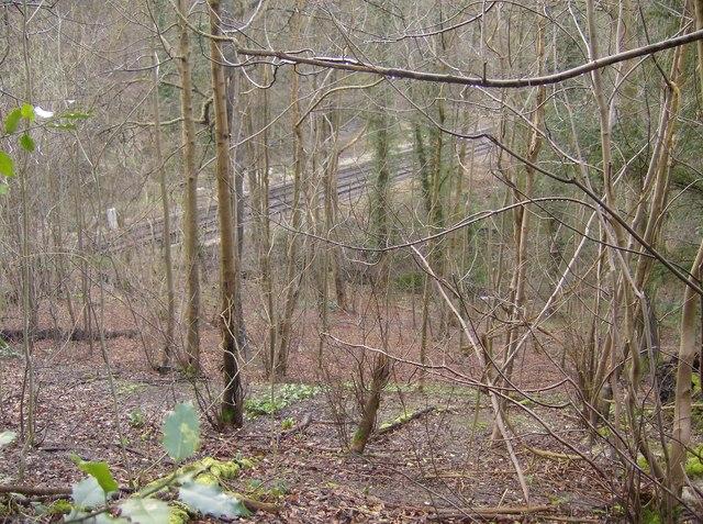 Railway through the woods