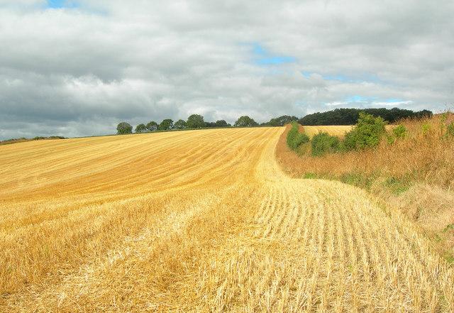 Farmland near Plumbley
