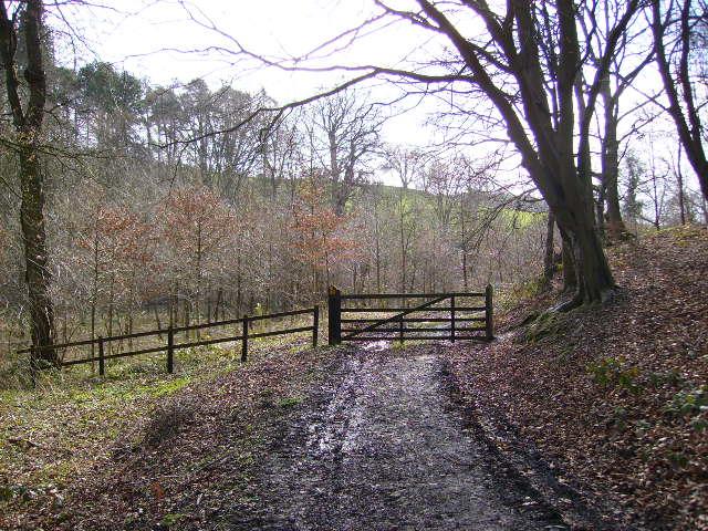 Public footpath entering Mill Wood