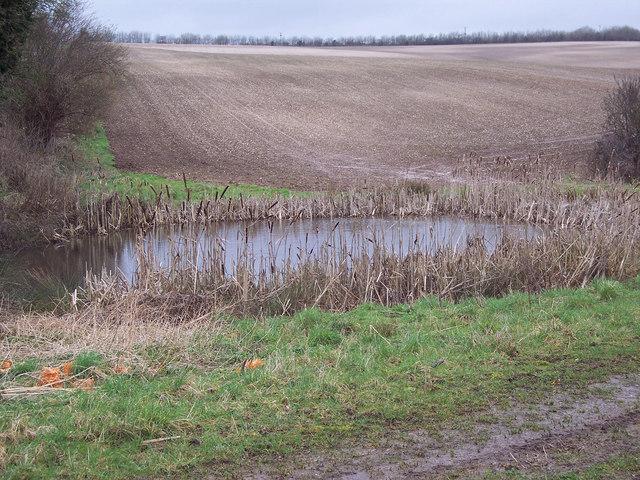 Pond near Butser Ancient Farm