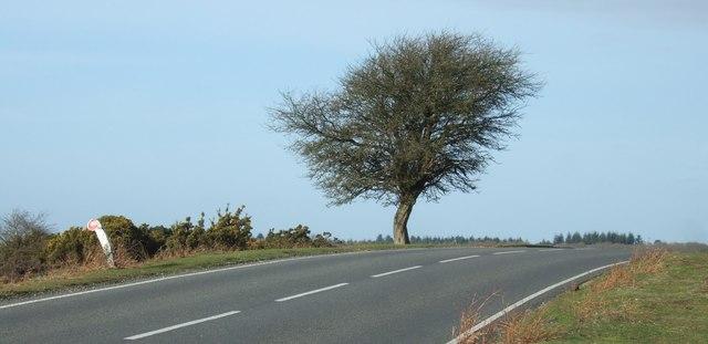 Lone Tree at Deadmans Hill