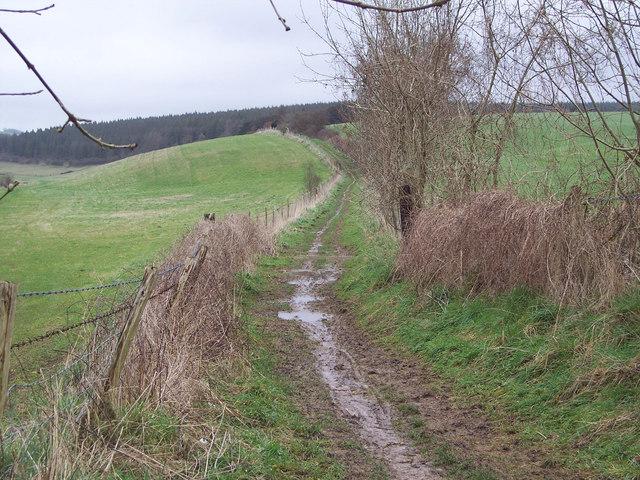 Bridleway to Queen Elizabeth Country Park via Charlton Down