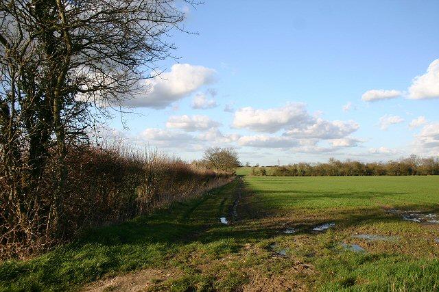Field boundary near Walsham-le-Willows