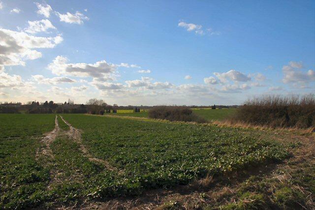 Fields near Falcons Hall Farm