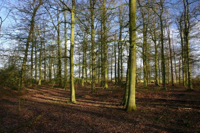 Cromwell's Plantation, Finningham