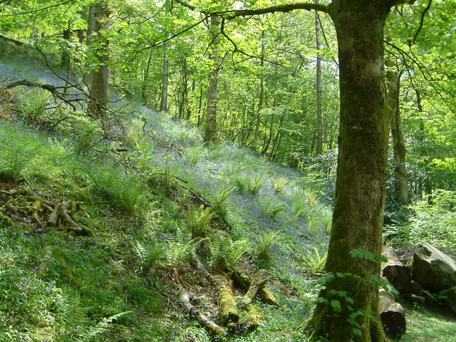 Bluebell Woods.