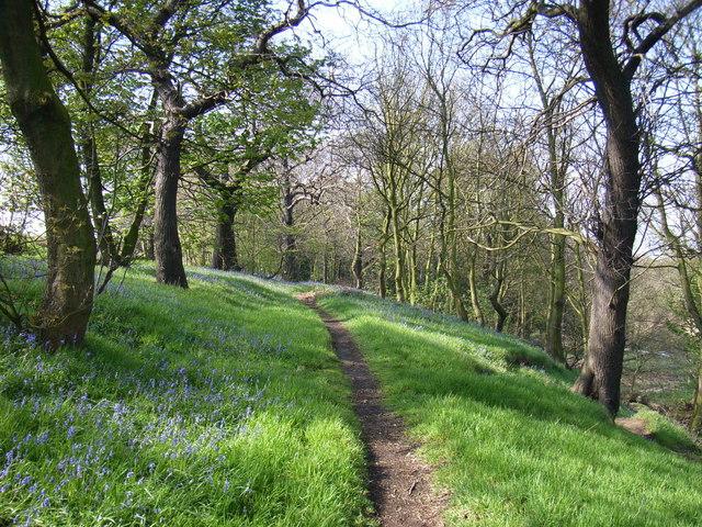 Half Moon Wood, Kirkthorpe, Wakefield