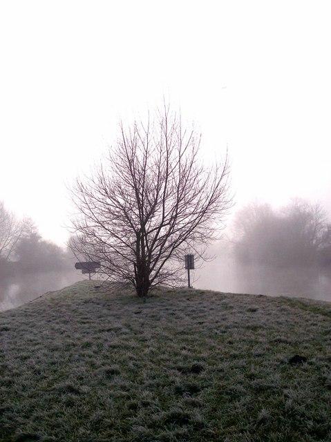 Tree near Sandford Lock