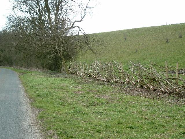 Layered hedge, Burdale