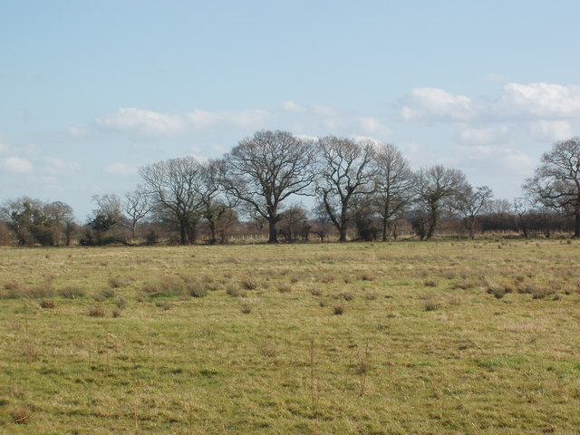 Trees and Hedging marking a field boundary, Shipton, North Yorkshire