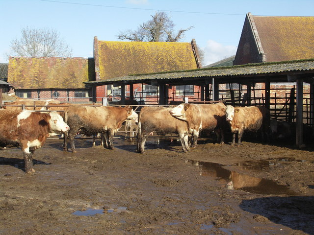 Lea Green Farm (dairy cattle)