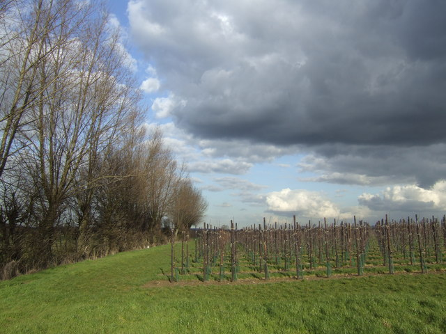 New orchards at Moat Farm