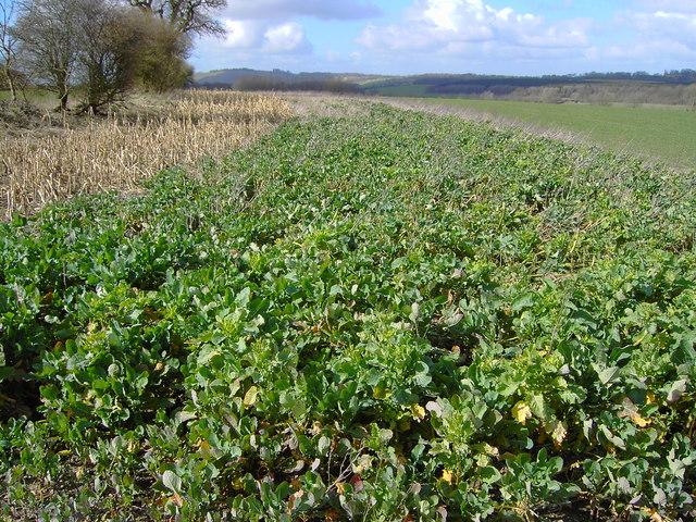 Field near Stibb Green, Wiltshire
