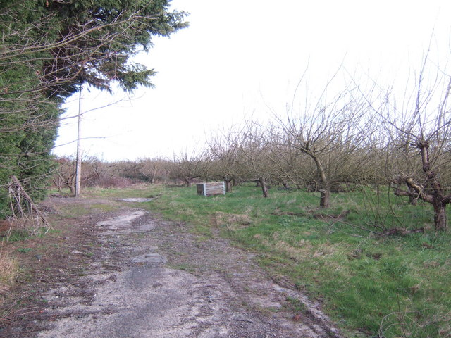 Abandoned orchard by Chantler's Hill