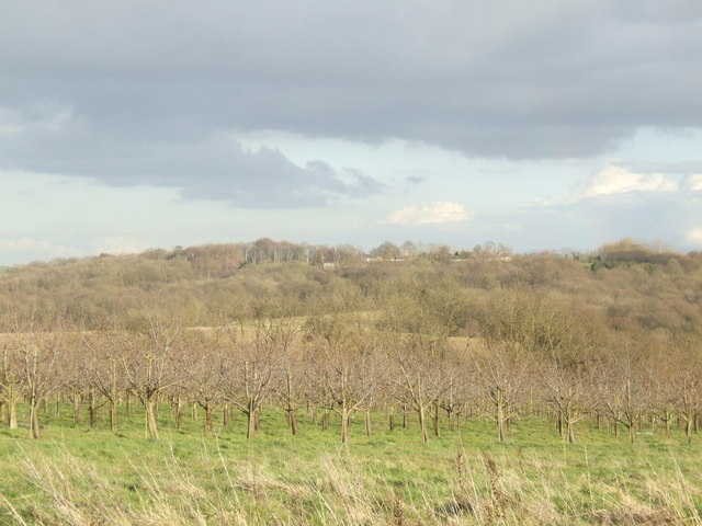 Orchard and Cinderhill Wood