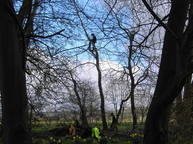 Tree surgery in progress, Southcott, Wiltshire