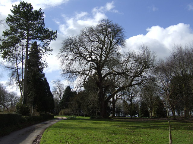 Treescape at Lus Hill