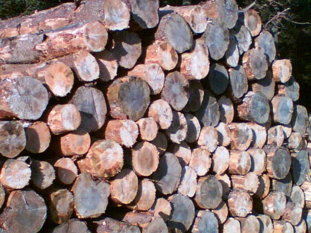 Lots of Logs