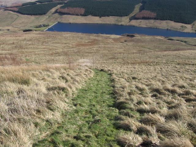 Pathway through Glen Quey Woodland Trust planting