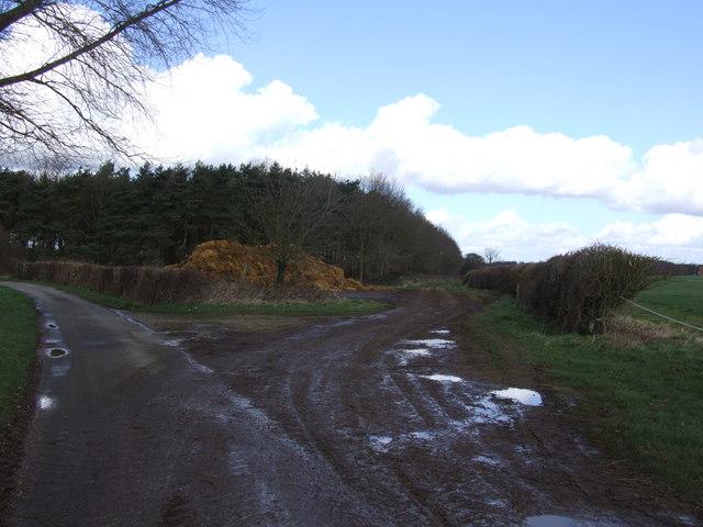 Muddy Track by Woodland Edge