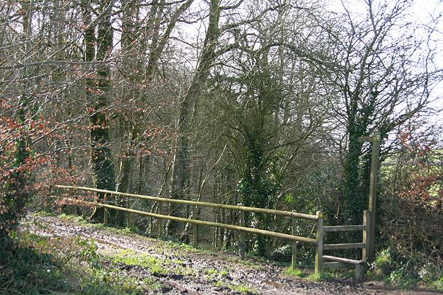 Morchard Bishop: Morchard Wood