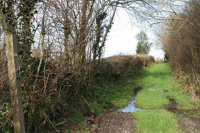 Morchard Bishop: footpath by North Leigh