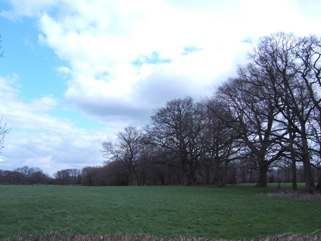 Mature trees south of Midhurst