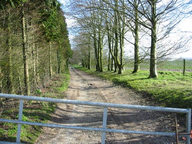 Bridleway near Fovant Wiltshire