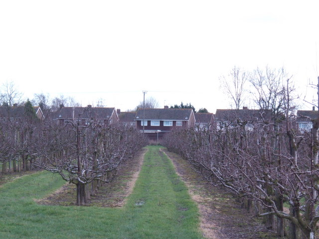 Apple orchard and houses