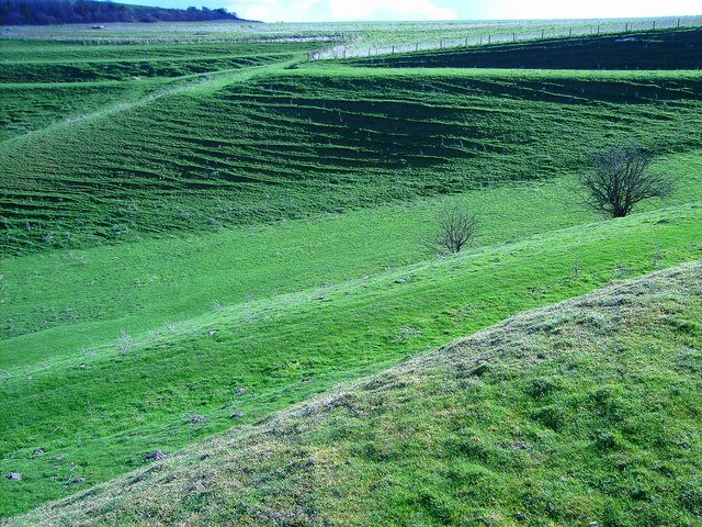 Field system south of Easton Royal, Wiltshire (3)