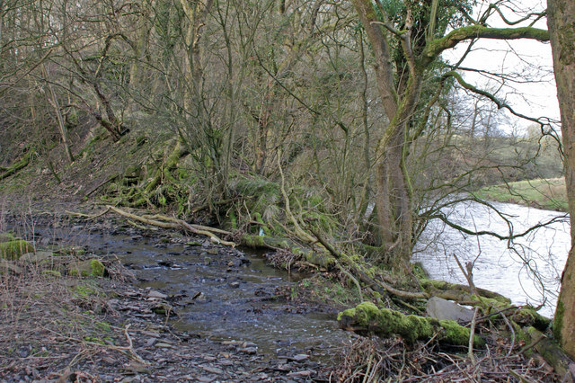 Deep Dale Syke meets the River Ribble