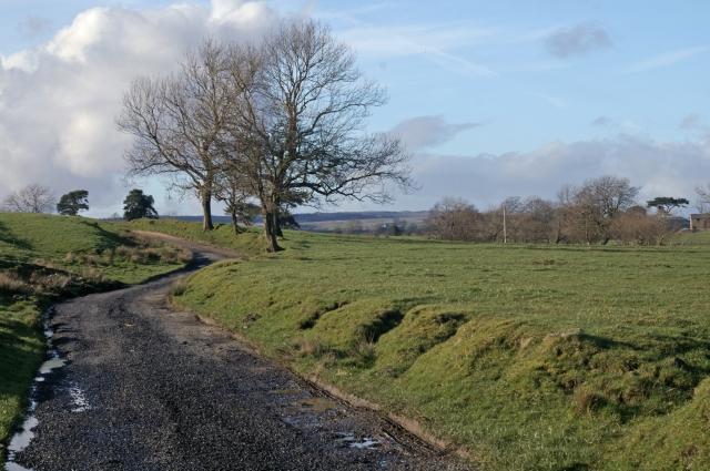 Track to Moss Laithe Farm