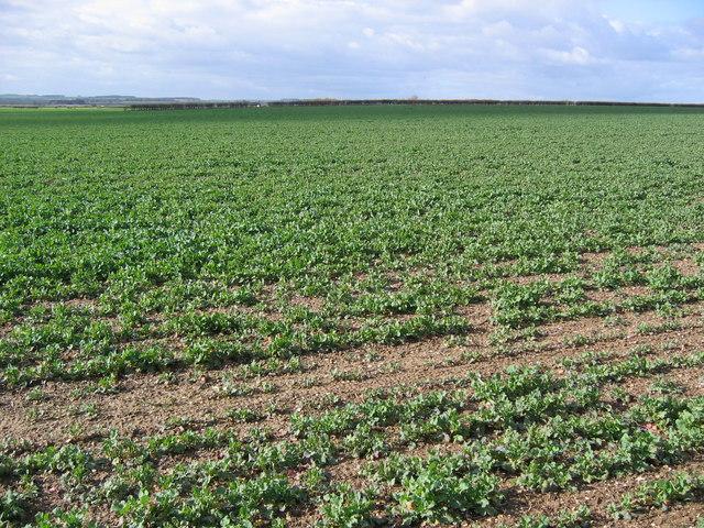 Farmland SW Of Garton