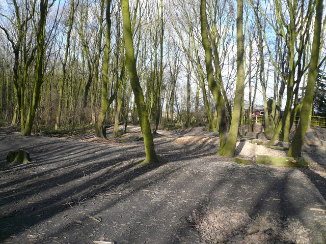 Far Tupton Wood
