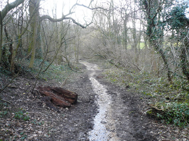 Dividing Path between Cowlishaw Wood (Left) and Carr Plantation (Right)